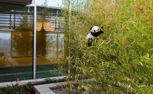One of the terrace gardens with the panda - January 2012. Photo courtesy of David Cox, DPR Construction.