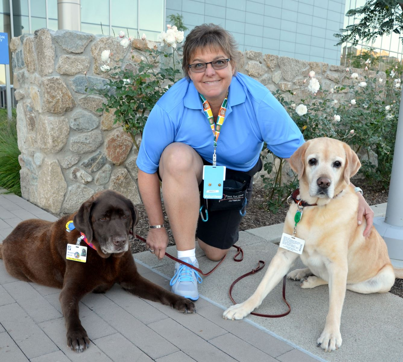 volunteer stories palomar health san diego county ca there are currently 30 dogs volunteering palomar paws program cathy er a professional dog trainer and volunteer coordinator for the program