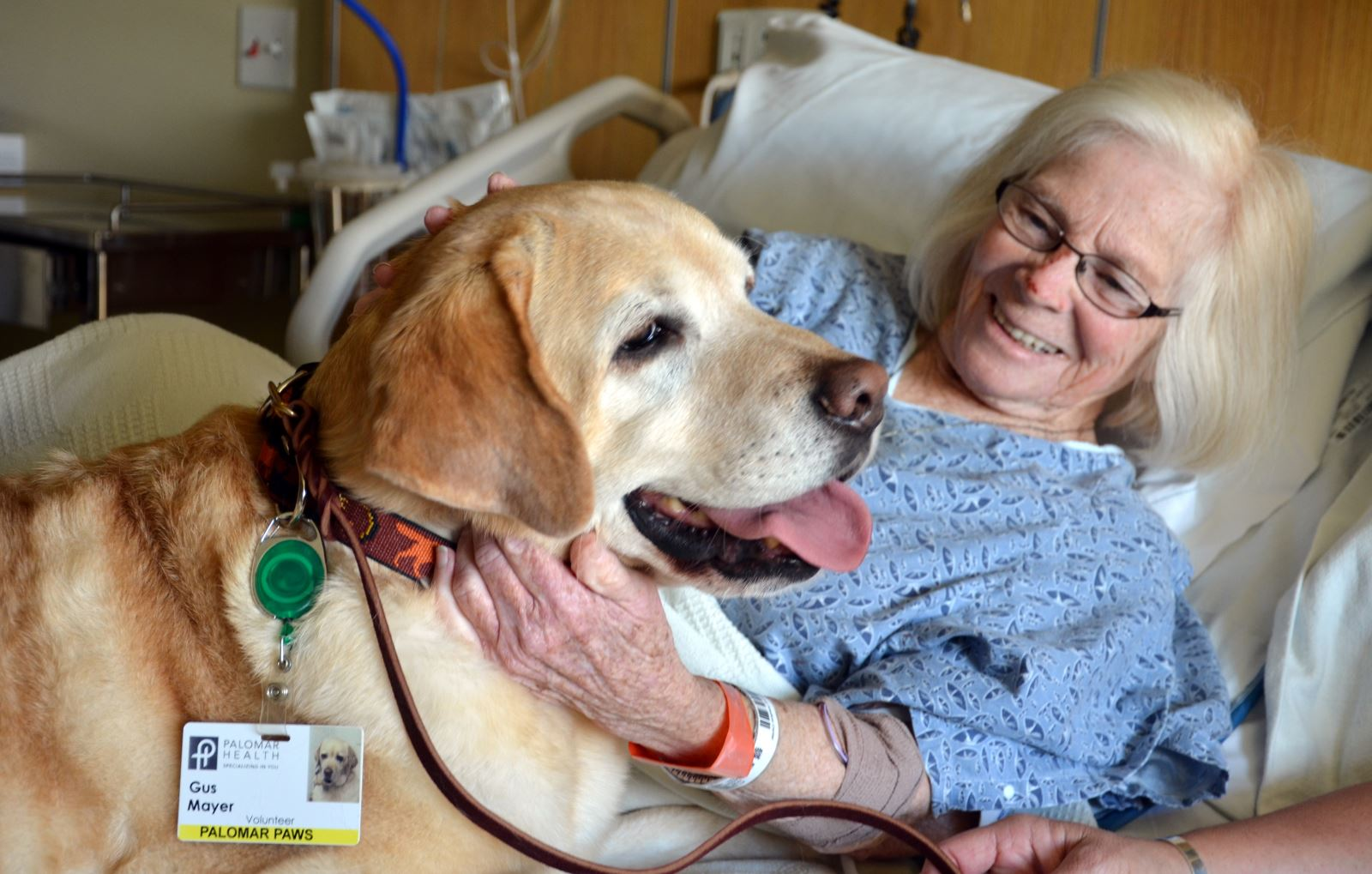 Best Dogs For Pet Therapy